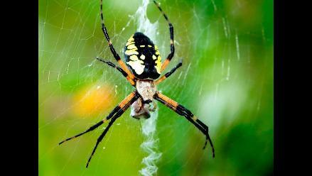 Conoce un poco más de las arañas y sus superpoderes