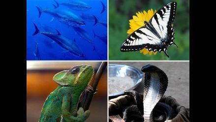 Más de 22 mil especies de animales en peligro de extinción según UICN