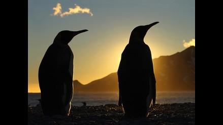 Focas son captadas teniendo sexo con pingüinos en la Antártida