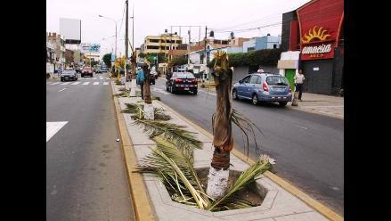 Trujillo: continúa tala indiscriminada de árboles en la ciudad