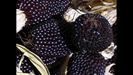 Chiclayo: nueva variedad de maíz morado tiene propiedades curativas
