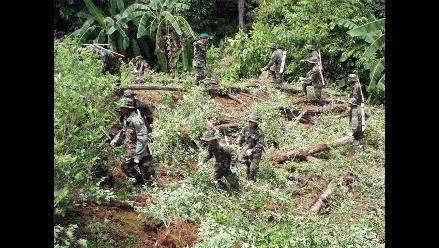 Suman 27,800 las hectáreas de hoja de coca erradicadas en el año