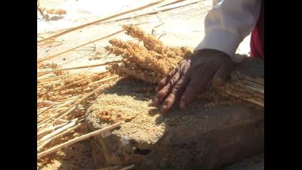 INEI: Crecen ingresos por exportación de quinua a setiembre