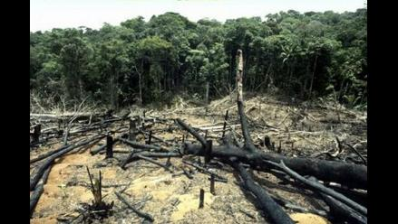 Perú ha perdido unos siete millones de hectáreas de bosques