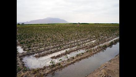 Lambayeque: empresas comenzaron a contratar personal en Olmos