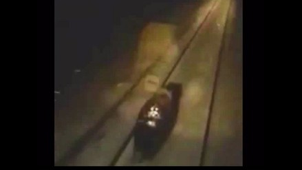Rusia: piden castigo para conductor de tren que persigue y arrolla a oso