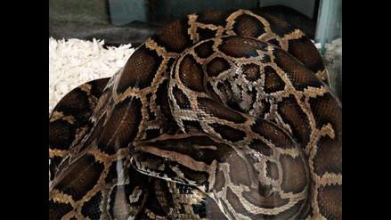 Anaconda devora a un hombre en polémico documental