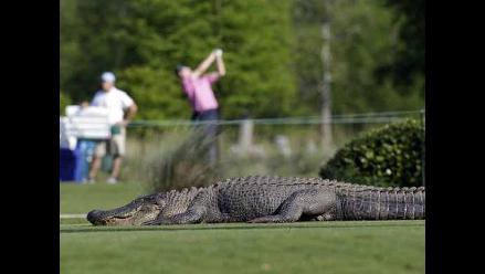 Golf: Cocodrilo mata a jugador que recogía bolas en lago