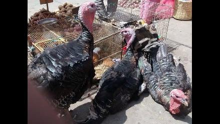 Cajamarca: precio del pavo se incrementa en el mercado de aves