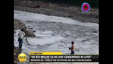 La Libertad: aguas residuales amenazan especies animales del río Moche