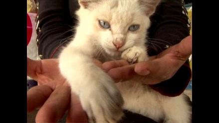Estudio demuestra que los gatos se parecen cada vez más a los perros