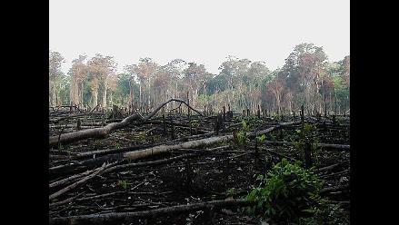 Sistema de monitoreo de tala ilegal iniciará en enero 2015