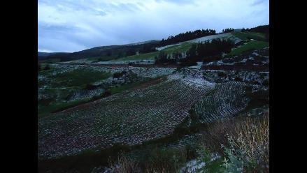 Puno: agricultores piden apoyo para cultivos afectados por granizada
