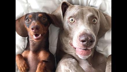 Instagram: Las mascotas más populares de la red