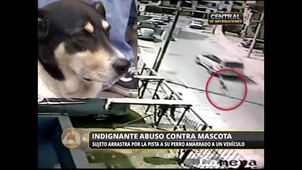 Bombero protagoniza indignante abuso contra mascota en Salamanca