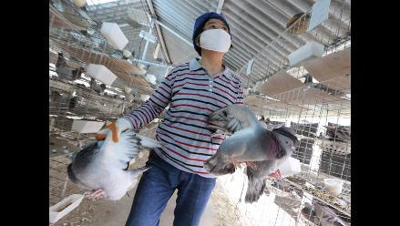 Detectan un brote de gripe aviar en aves silvestres de EE.UU.