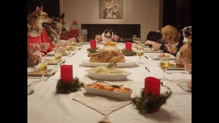 YouTube: la irreal cena navideña entre un gato y 13 perros