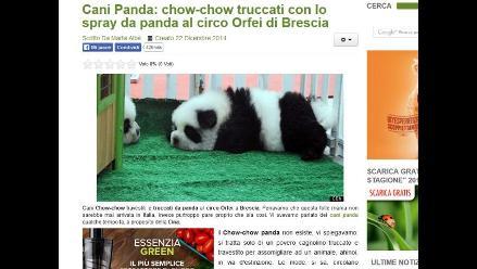 Italia: Cierran circo que exhibía perros camuflados de osos panda