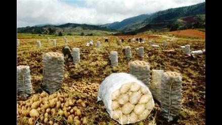 INEI: Producción nacional de papas creció en octubre
