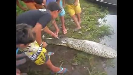 YouTube: Cortan una serpiente viva para sacar a cocodrilo