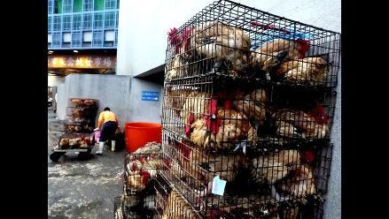 Libia: preocupación por cinco víctimas a causa de la gripe aviar