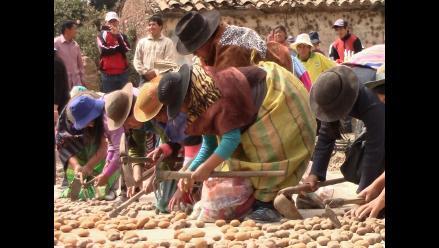 Minagri: 63 mil familias de pequeños productores ingresarán al mercado