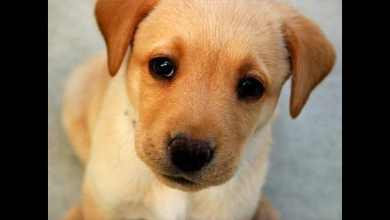 Año Nuevo: Nueve tips para proteger a tu mascota del ruido de pirotécnicos