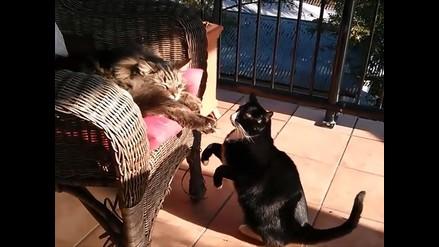 YouTube: ¿un acto de maldad o una cruel broma entre gatos?