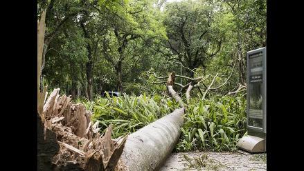 Brasil: Un temporal derriba 198 árboles en Sao Paulo