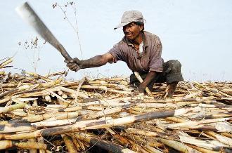 Lambayeque: no más contaminación por quema de caña de azúcar