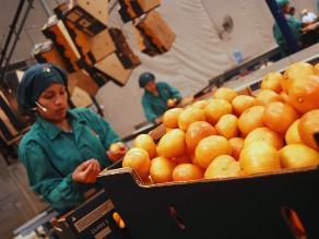 Minagri: Exportaciones agrarias crecieron 21% en 2014