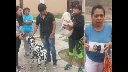 Vecinos de San Juan de Miraflores denuncian envenenamiento de perros