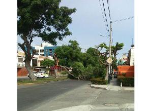 #Rotafono: árbol caído bloquea el tránsito en San Miguel