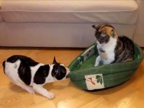 YouTube: tierna pelea entre un gato y un perro por una cama