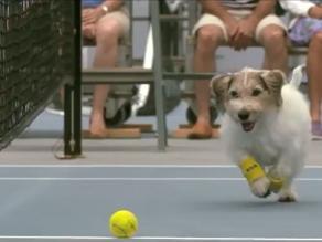 Youtube: Perros recogebolas maravillaron a Venus Williams y Kuznetsova