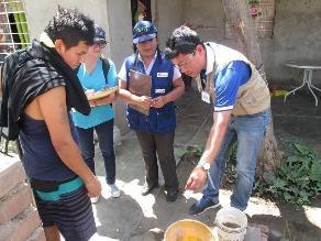 Lambayeque: zancudo del dengue también transmite el chikungunya