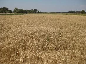 Producción nacional de harina industrial crecerá este año
