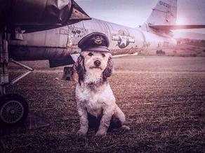 Facebook: perros de albergue protagonizan sesión de fotos