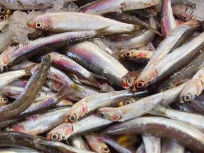 Consumo de pescado durante el embarazo mejora la visión de los niños