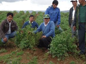 Apurímac: 300 hectáreas de cultivo afectadas por lluvias