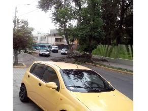 Rama de árbol cae en medio de una autopista en Arequipa