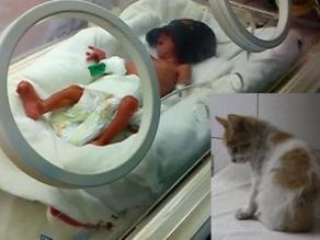 Ginecólogo sobre incubadoras: En Perú hay una crisis del sistema neonatal