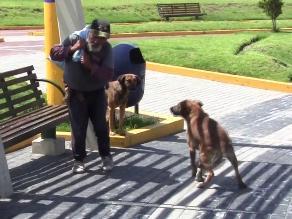 Perros en Arequipa no padecen del mal de rabia