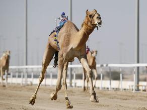 Carrera de camellos: robots reemplazan a los jinetes humanos