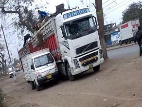 Oveja es lanzada a un camión en el distrito de Puente Piedra