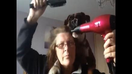 YouTube: conoce al perro que se ´pelea´ con una secadora