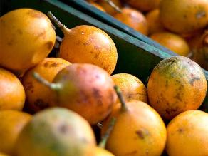 Productores de granadillas de Oxapampa abastecen a supermercados