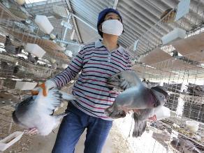 Taiwán: Sacrifican a más de 2,3 millones de aves por gripe aviar