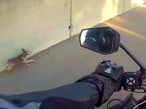 YouTube: Perro salta a autopista e intenta salvar su vida