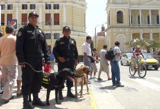 Arequipa: canes integrarán patrullaje de seguridad ciudadana en distrito